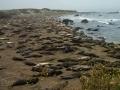 elephant_seal_beach