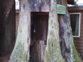 TeleStump at the Emerald Forest of Trinidad