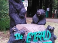 Welcoming Bears at the Emerald Forest of Trinidad
