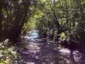 Bush Creek flows past Humbug Mountain campground