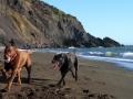 Jasmine and Pepper enjoying the beach