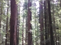 Humboldt Redwoods along the scenic drive to the Lost Coast