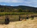 Anderson Valley Wine Country - Pennyroyal Farm