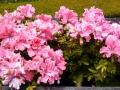 Navarro Winery flowers