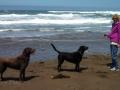 Kim & pups at Manchester Beach