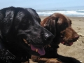 Pepper and Jasmine at Manchester Beach