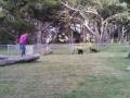 Spacious dog park at the Manchester Beach / Mendocino Coast KOA