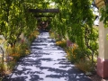 Castoro_Winery_Arbor