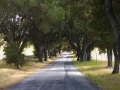 Paso_Robles_backroad1