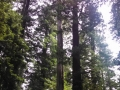 Avenue of the Giants Redwoods