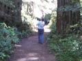 Lady Bird Johnson Grove Redwoods