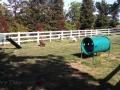 Dog park at the San Francisco North / Petaluma KOA