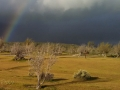 Mojave_River_Forks_Rainbow
