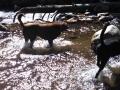 Jasmine & Pepper playing in the stream below Lake Sabrina