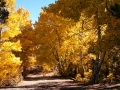 Green Creek Aspen