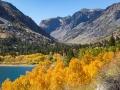 Lundy Lake Aspen