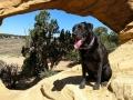 Pepper at Dutchman Arch, San Rafael Swell, Utah