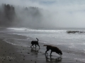 Jasmine & Pepper playing on First Beach