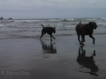 Jasmine & Pepper playing on beach at Makah Bay