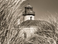 Sea Grass and Coquille River Lighthouse