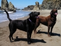Happy pups at Bandon Beach