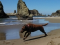 Jasmine & Pepper playing at Bandon Beach
