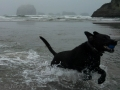 Pepper playing in the surf at Bandon Beach