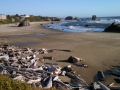 Bandon Beach & Logs