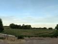 Blue Cut RV Park - Adjacent Field