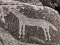 Bluff-Horse-Petroglyphs-6