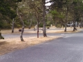 Campsites at Bullards Beach State Park