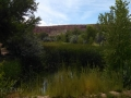 Cadillac-Ranch-Pond