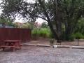 Cadillac-Ranch-Tent-Sites-1