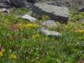 Governor-Basin-Wildflowers-1