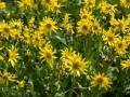 Governor-Basin-Wildflowers-3