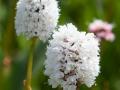 Governor-Basin-Wildflowers-4