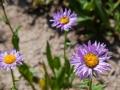 Governor-Basin-Wildflowers-6