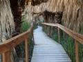 Palm-Grove-Boardwalk