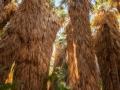 Palm-Grove