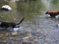 Pups-at-Lake-City-1