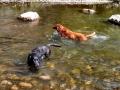 Pups-at-Lake-City-2