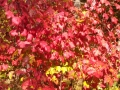 Itasca-SP-Fall-Color-1