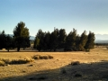 Trees and Meadow at Mojave River Forks
