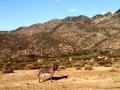 Wild Burros at Mojave River Forks
