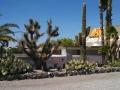 Needles-KOA-Cactus-Garden