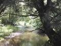 Neskowin Creek