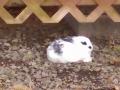 Resident bunny at Neskowin Creek RV Resort