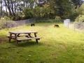 Pet run at Neskowin Creek RV Resort