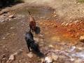 Pups-in-Stream-Ophir-Pass