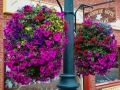 Ouray-flower-baskets